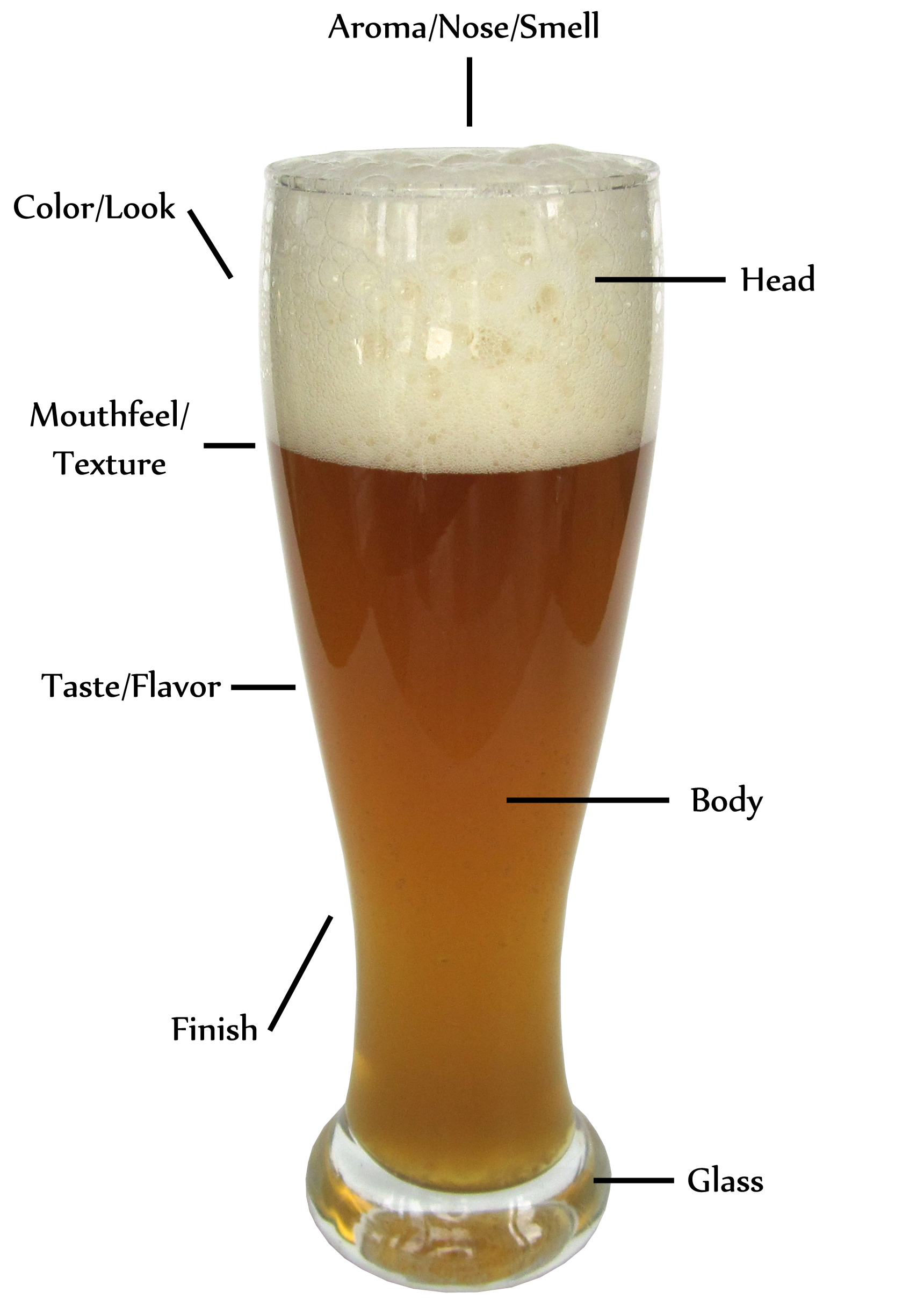 The Anatomy of a Beer | Definitive Ale
